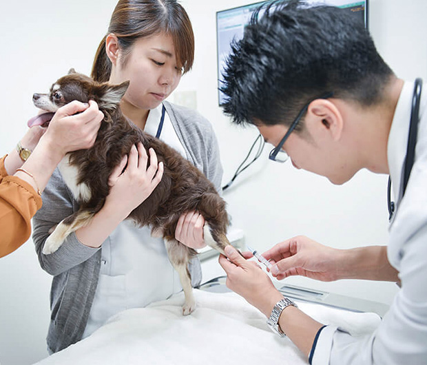 犬の診察のイメージ